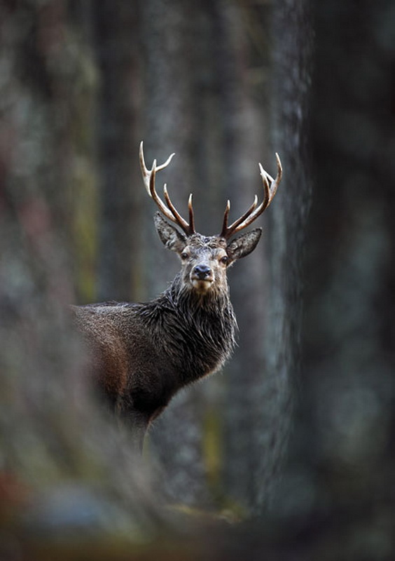 1516 Победители конкурса The British Wildlife Photography Awards 2012