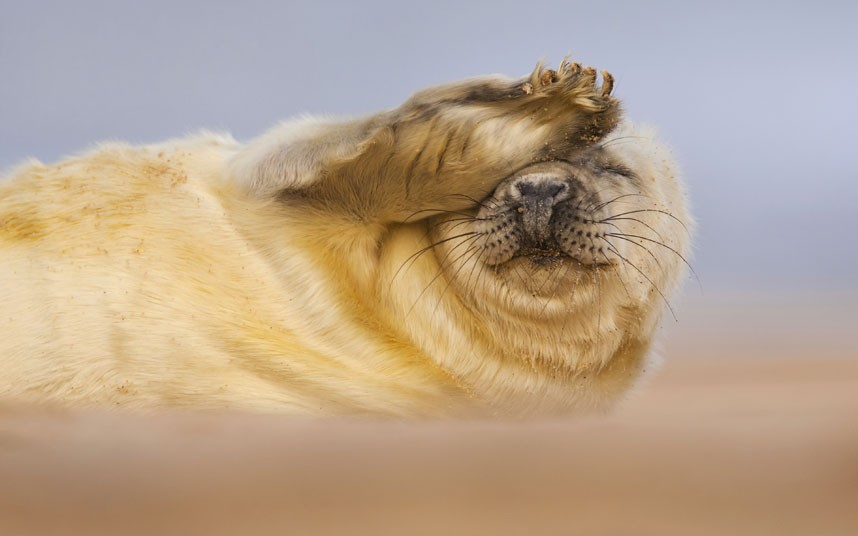 1616 Победители конкурса The British Wildlife Photography Awards 2012