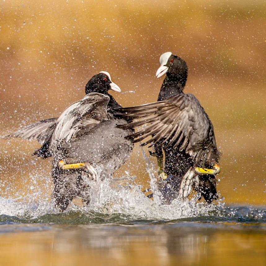 416 Победители конкурса The British Wildlife Photography Awards 2012