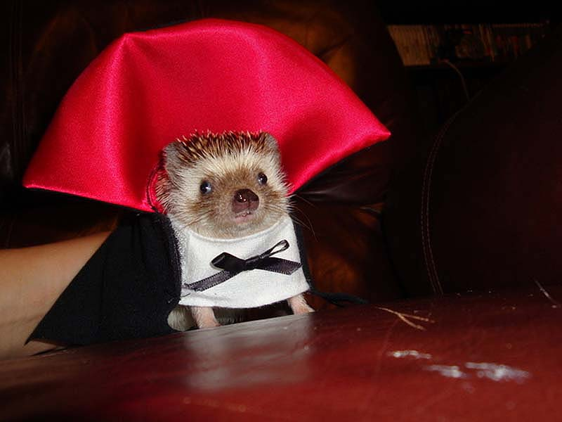 Hedgehog For Halloween 1 ��� �������� ����� �� ��������