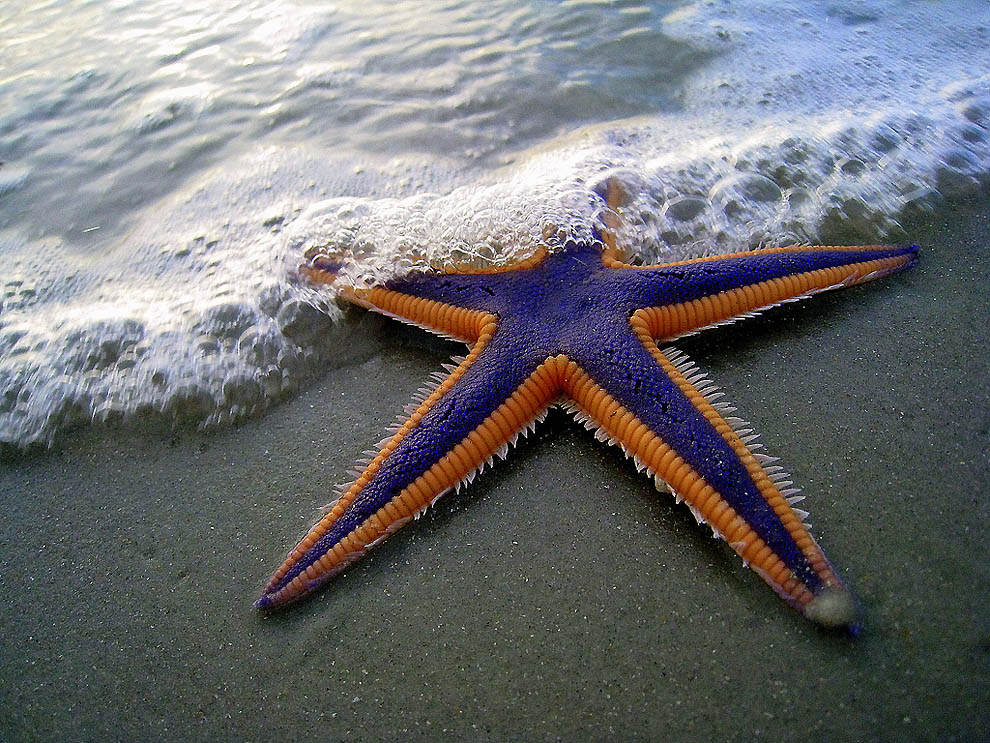 the life of starfish in starfish by lorna dee cervantes and sea stars by barbra hurd Emplumada has 172 ratings and 10 reviews 1 of 5 stars 2 of 5 stars 3 of 5 stars 4 of 5 stars 5 of 5 lorna dee cervantes was born on august 6, 1954, in san.